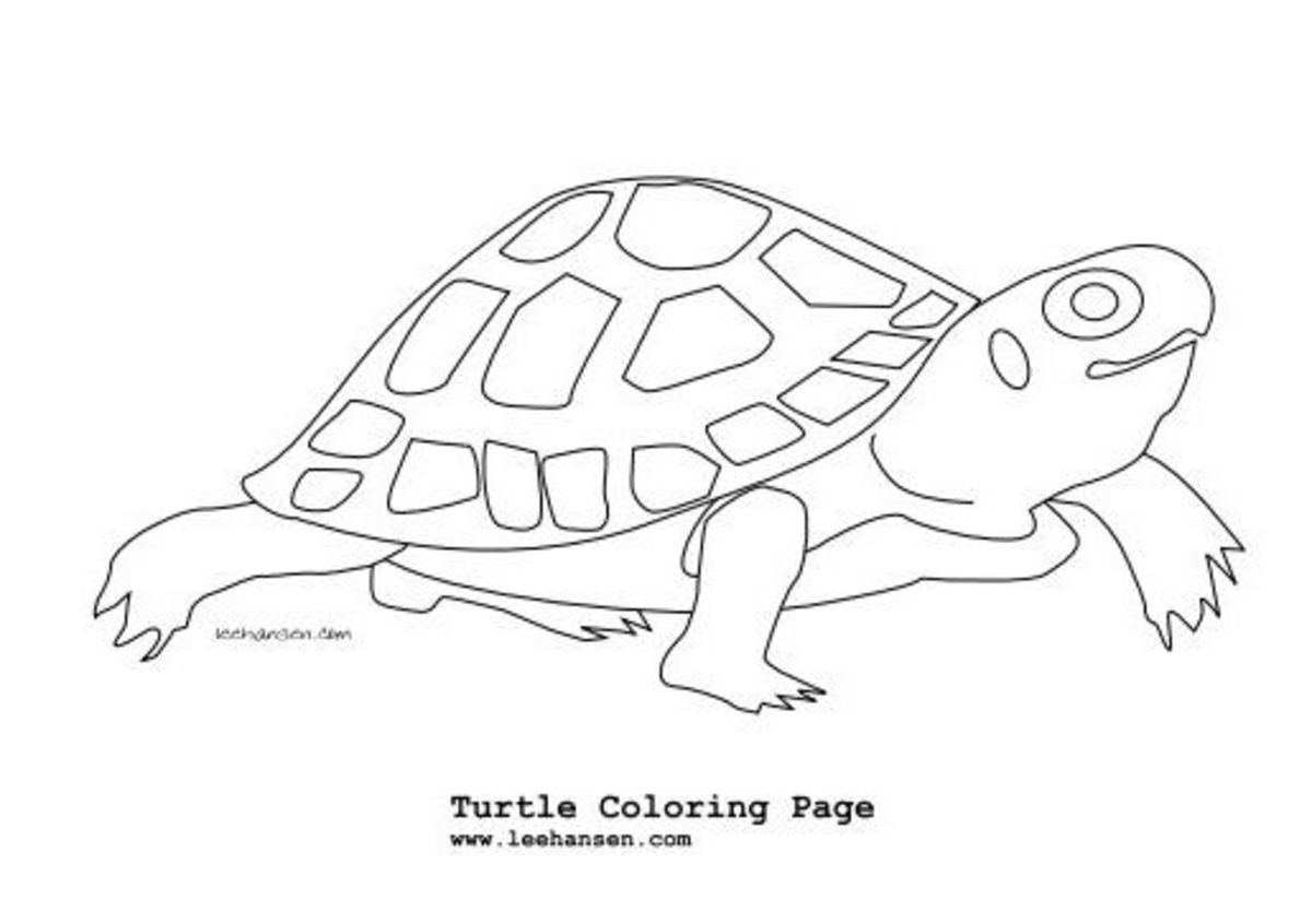 Coloring pages of amphibians and reptiles ~ Reptiles & Amphibians Coloring Pages
