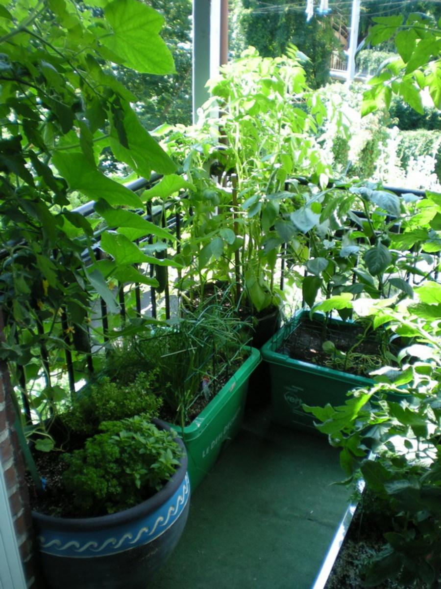 Make a garden on your balcony