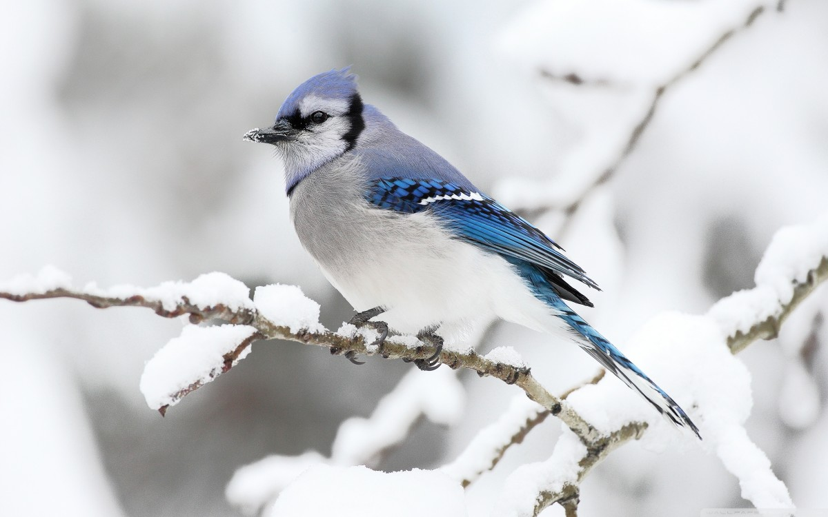 7087951 f1024 - Most beautiful Birds of The World