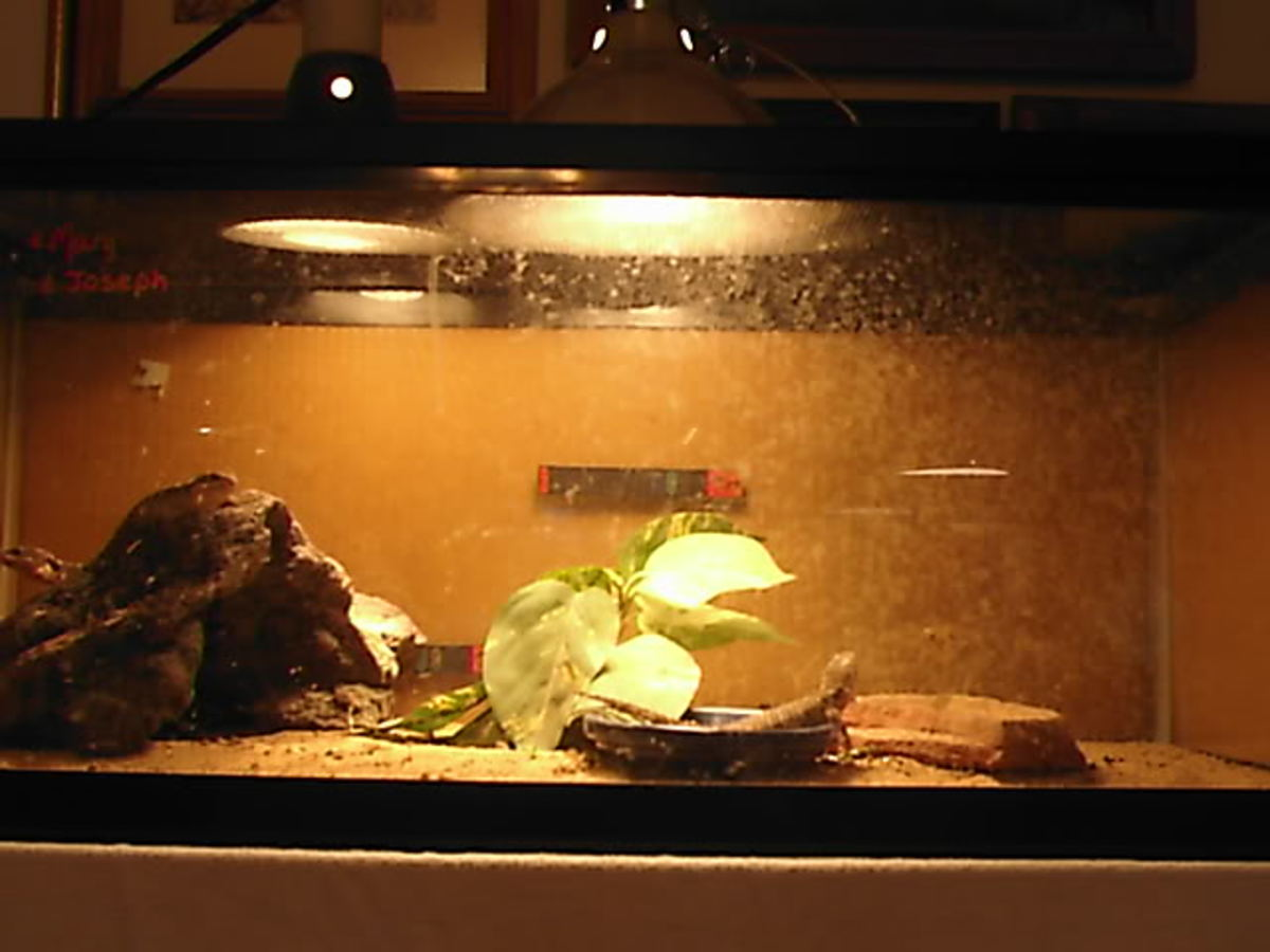 How to Build a Leopard Gecko Vivarium/Terrarium