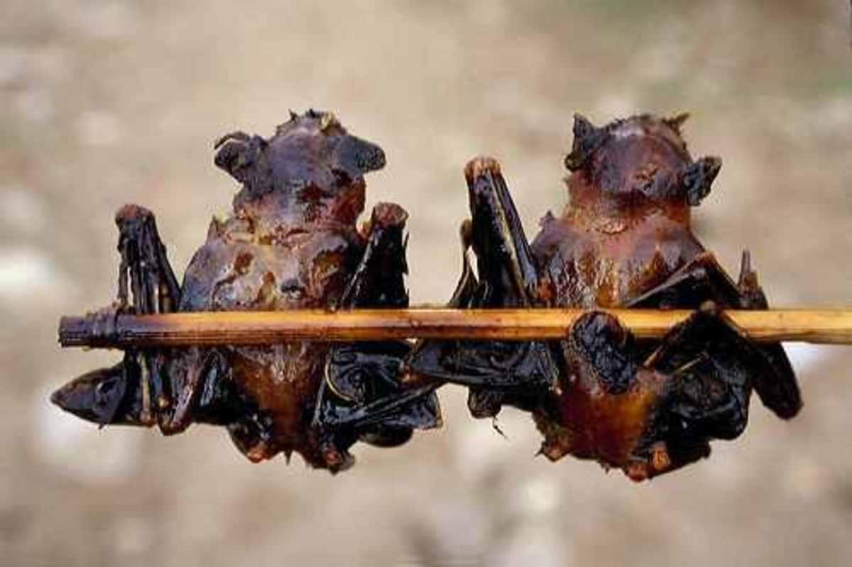 roasted bats
