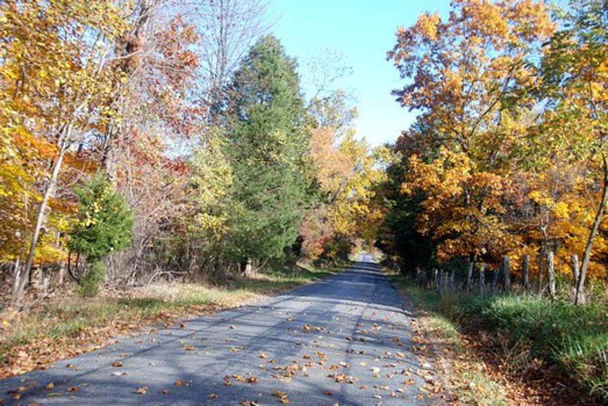 Just Another Country Road dispalying the beautiful fading Autumn colors.