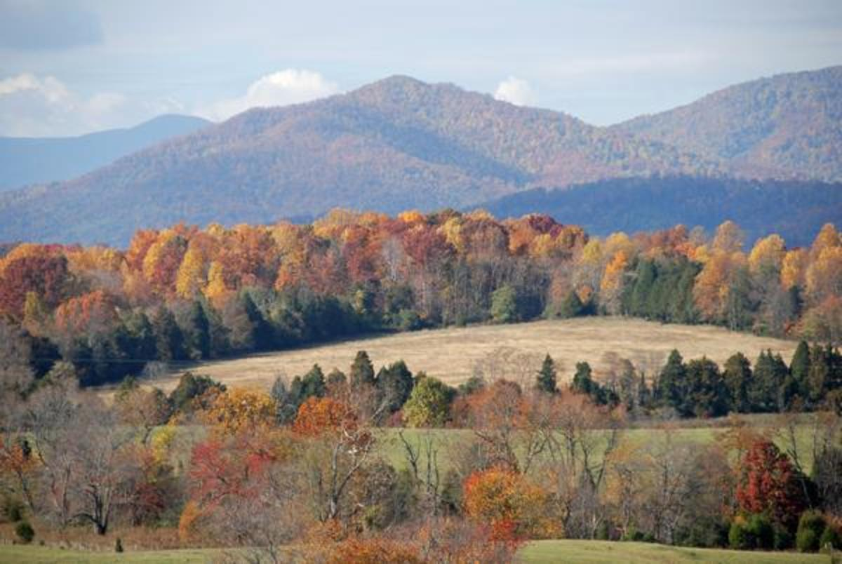 Autumn Colors in Forest Virginia - site of Thomas Jefferson's Poplar Forest home.