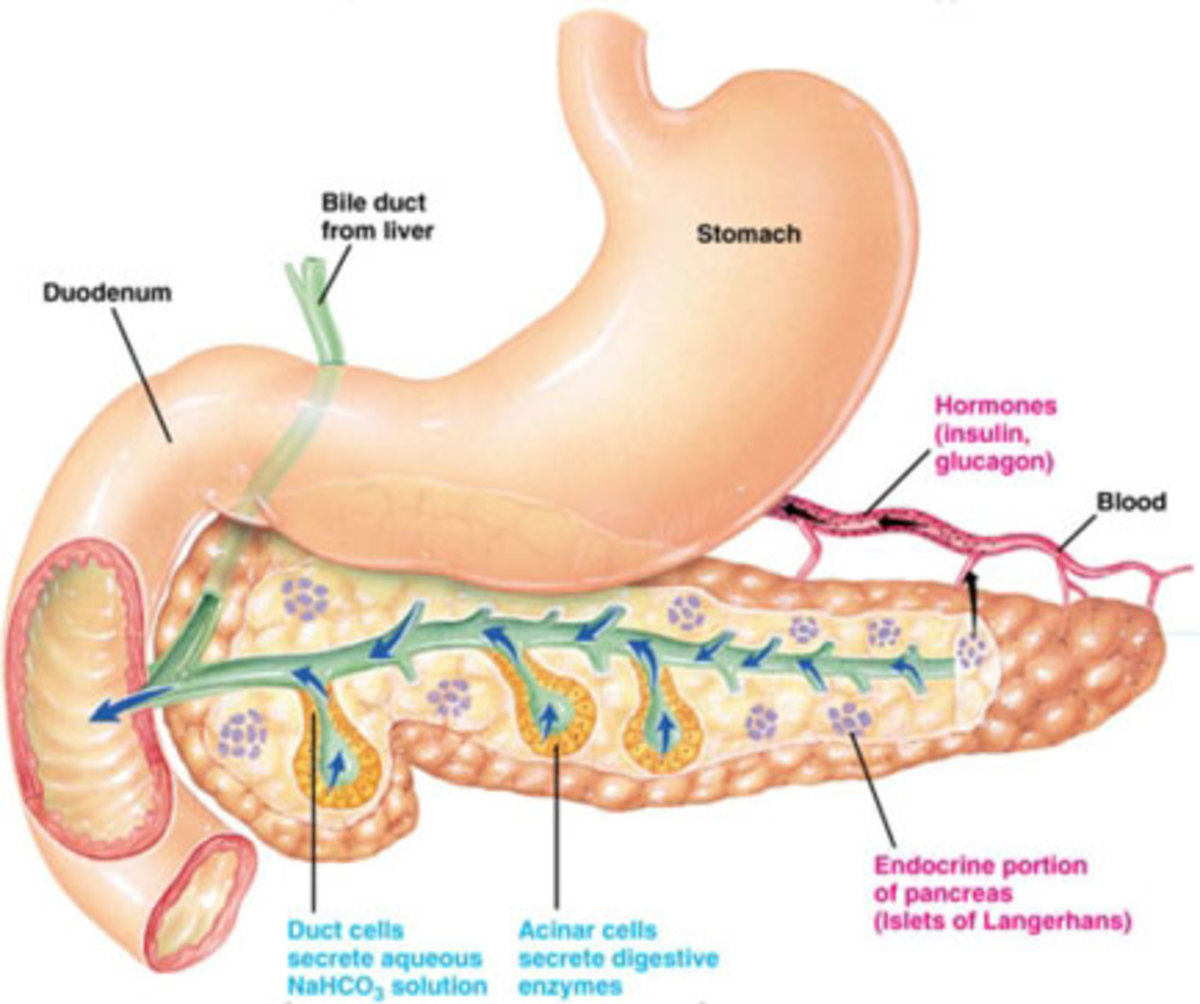 In people with diabetes, the pancreas does not produce enough insulin, or the insulin produced does not work properly