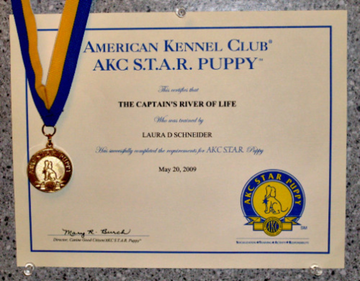 S.T.A.R. Puppy award certificate and award medallion with ribbon