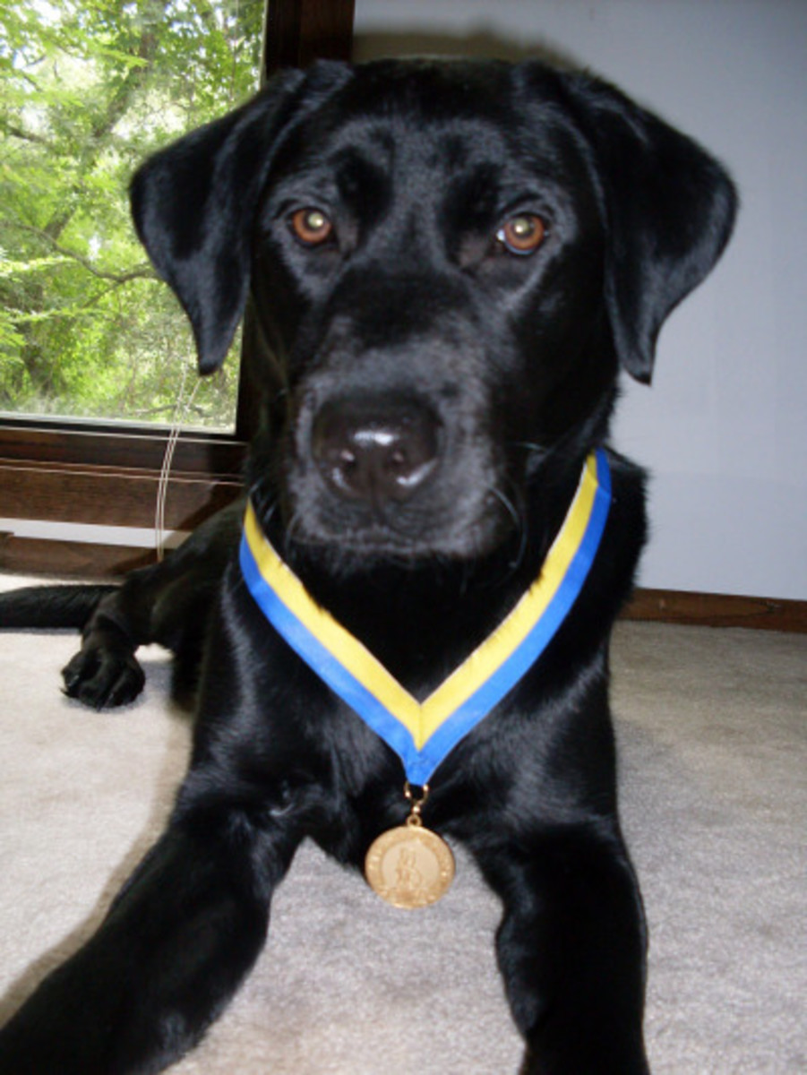 """River"", sporting her shiny gold-tone medallion S.T.A.R.  award"