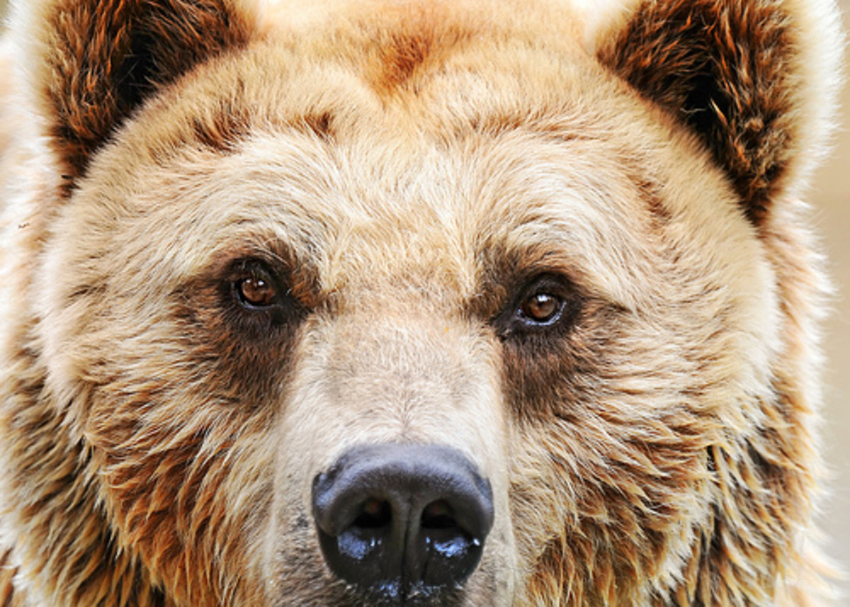 Photo by: http://www.flickr.com/photos/tambako/