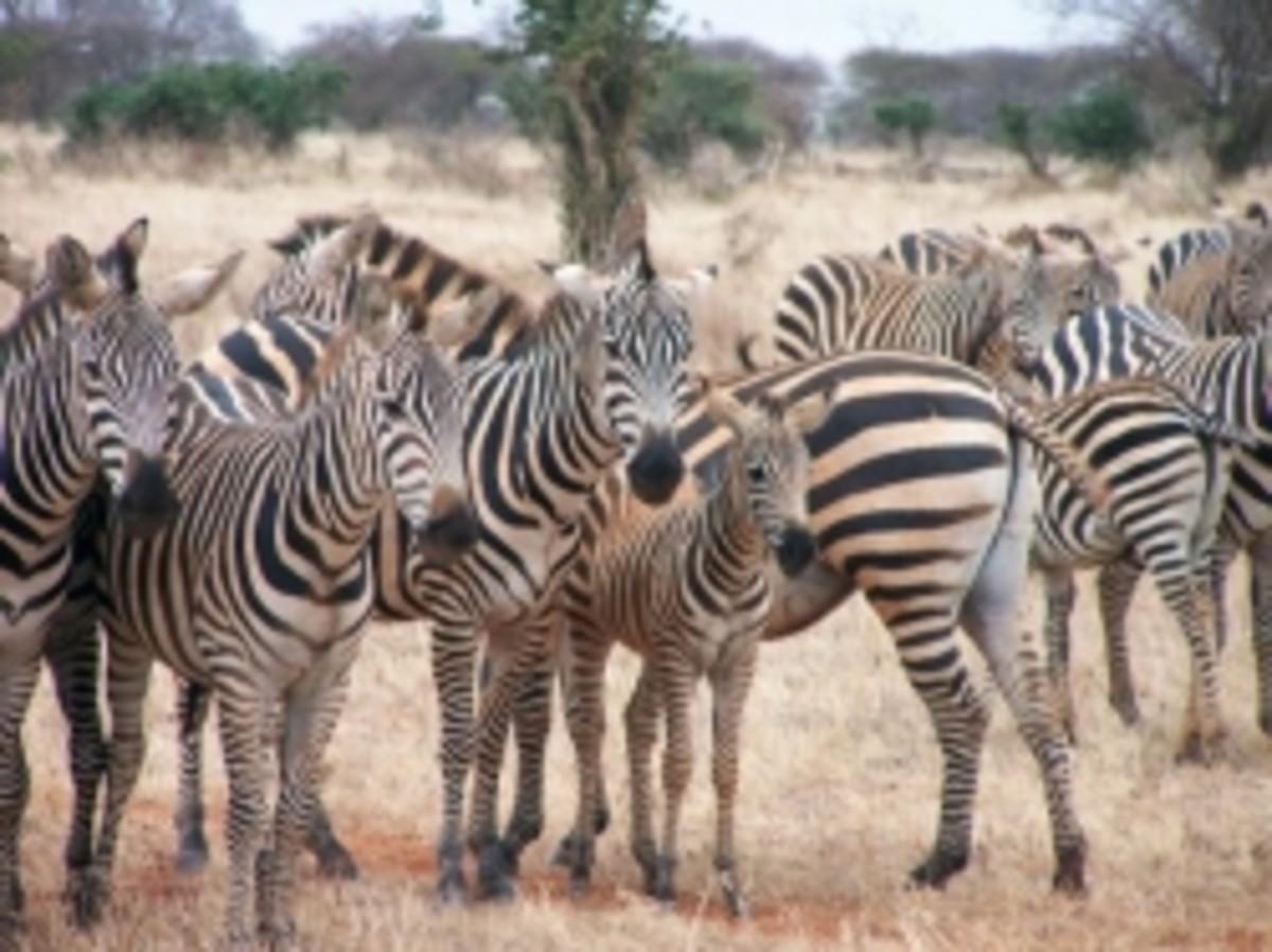 animal-group-names