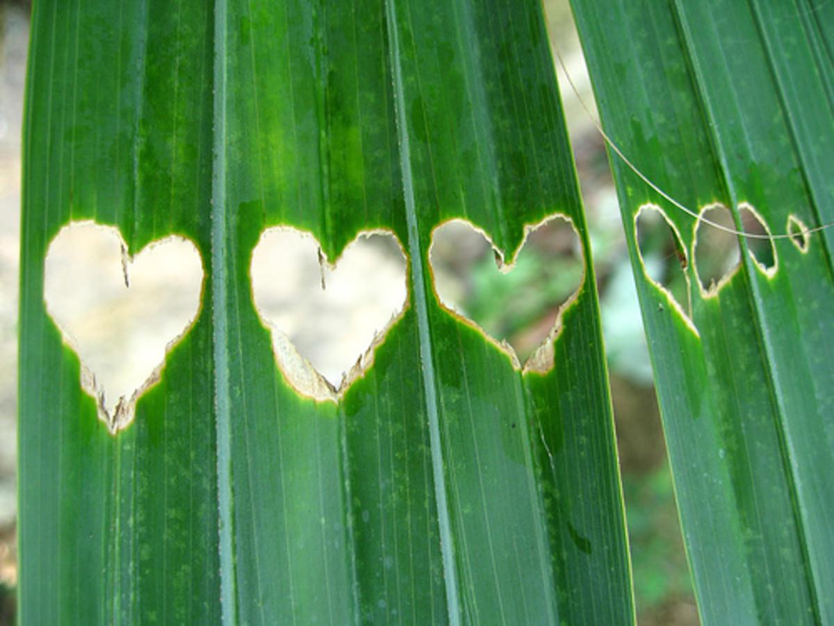 palm heart