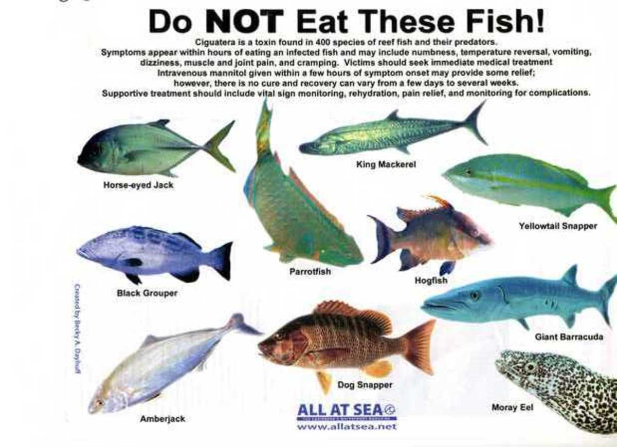 Multiple sclerosis ciguatera fish poisoning for Names of fish to eat