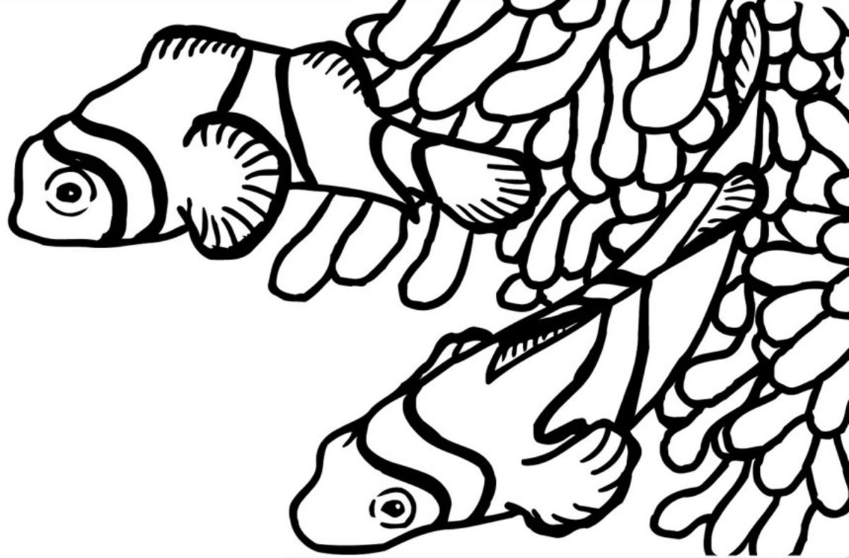 Under the Sea Creatures, Coloring Pages Free, Pictures to Print and Color