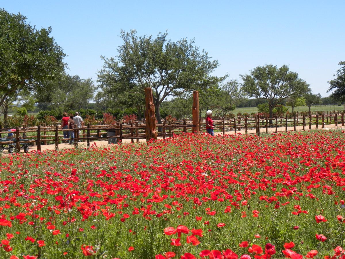 Wildseed Farms in Fredericksburg TX