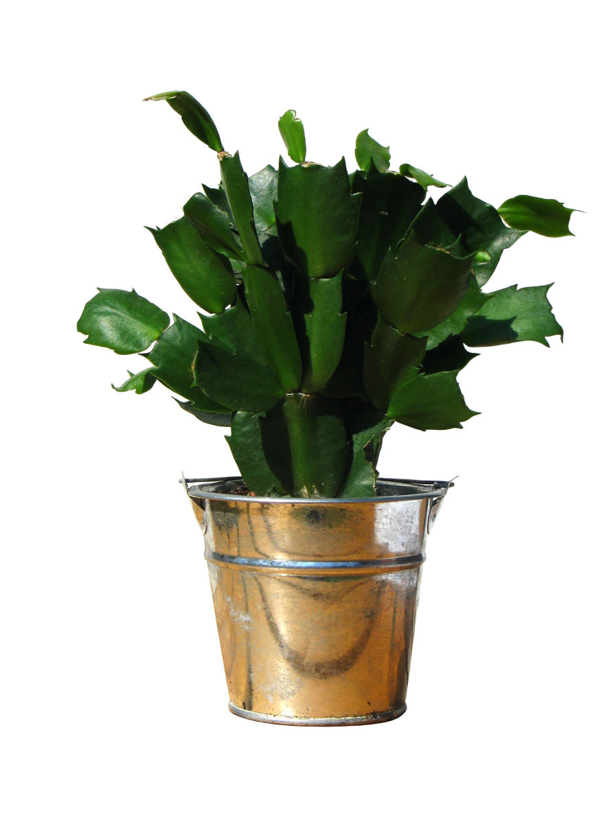 Here's an unconventional plant that you could easily use as a funeral gift.