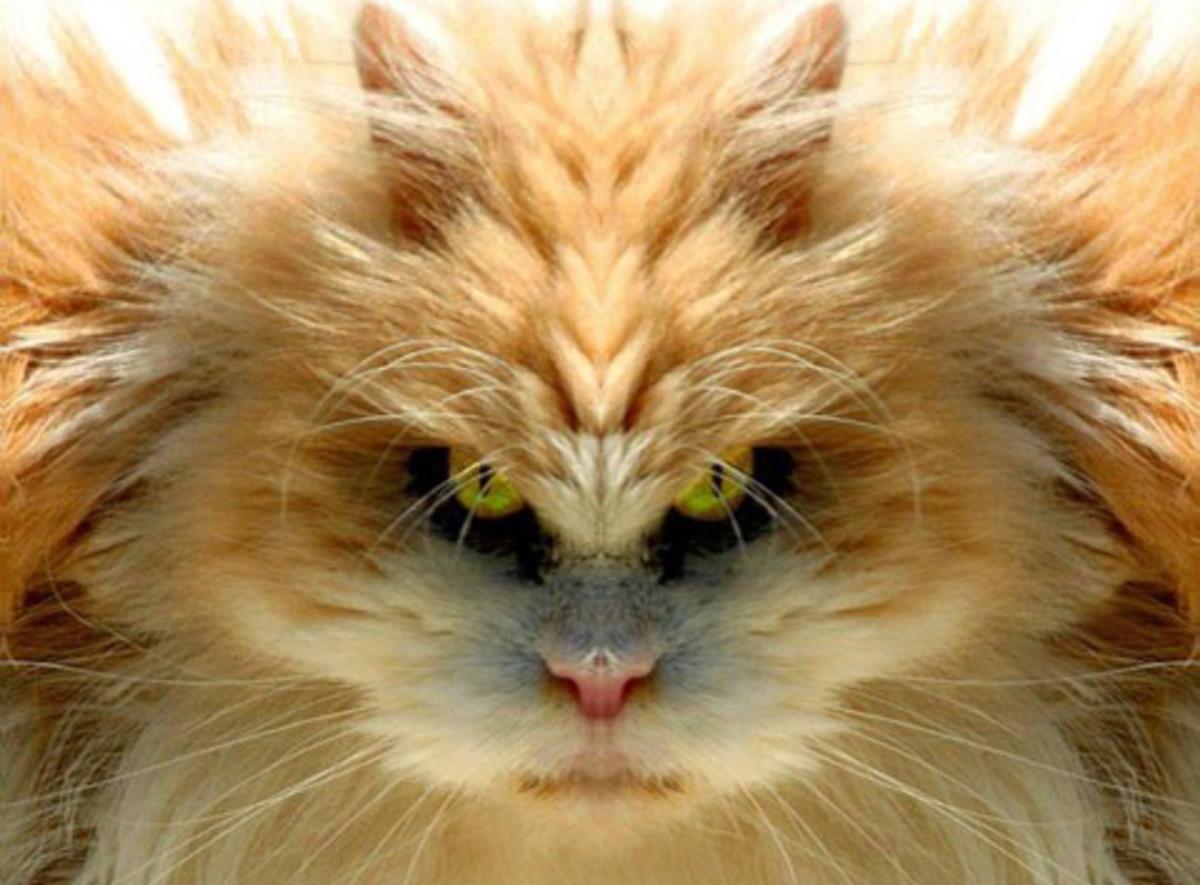 Image Source Location: http://thinningtheherd.wordpress.com/2009/09/21/5-cats/