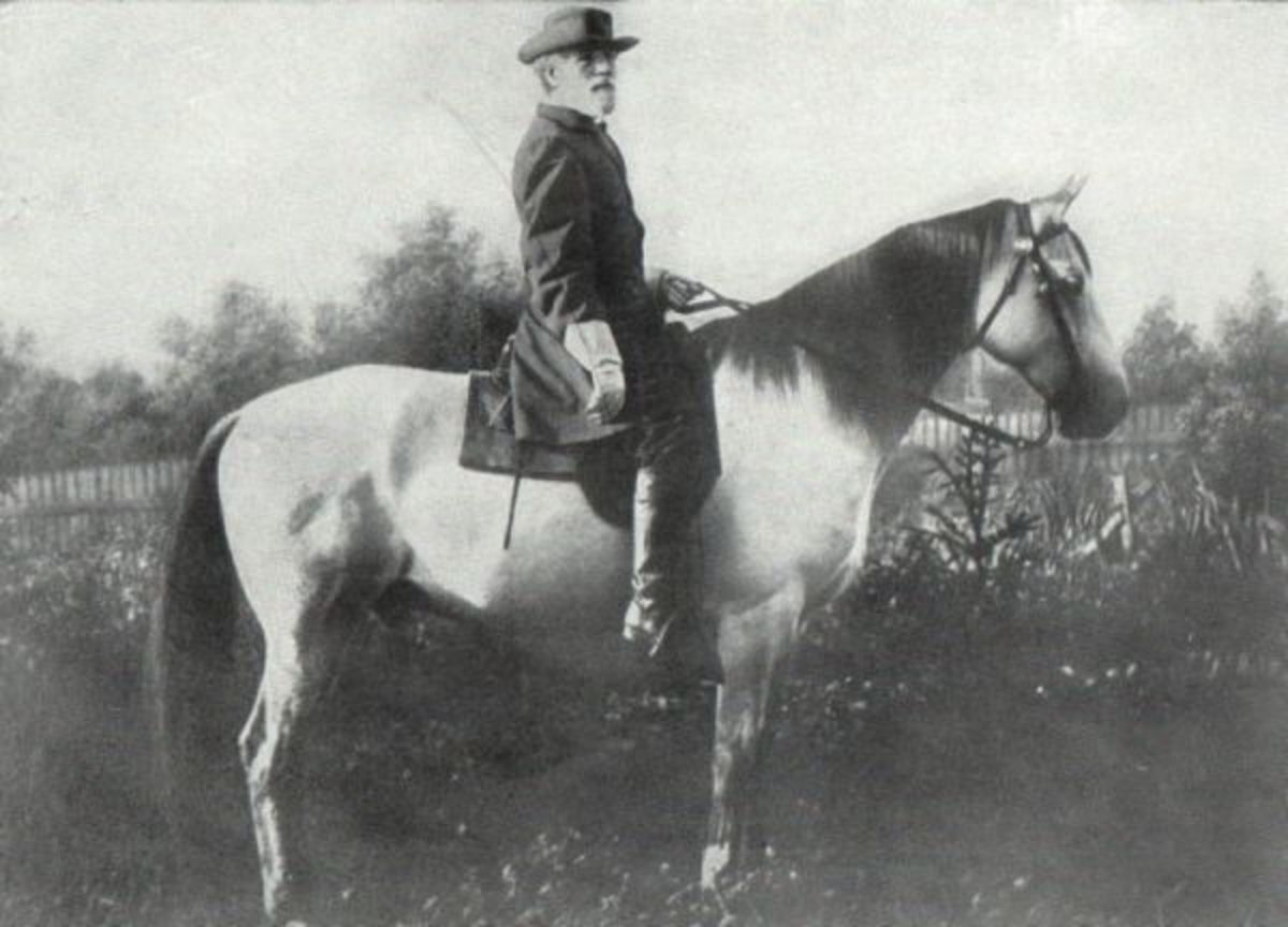 Famous American Civil War Horses