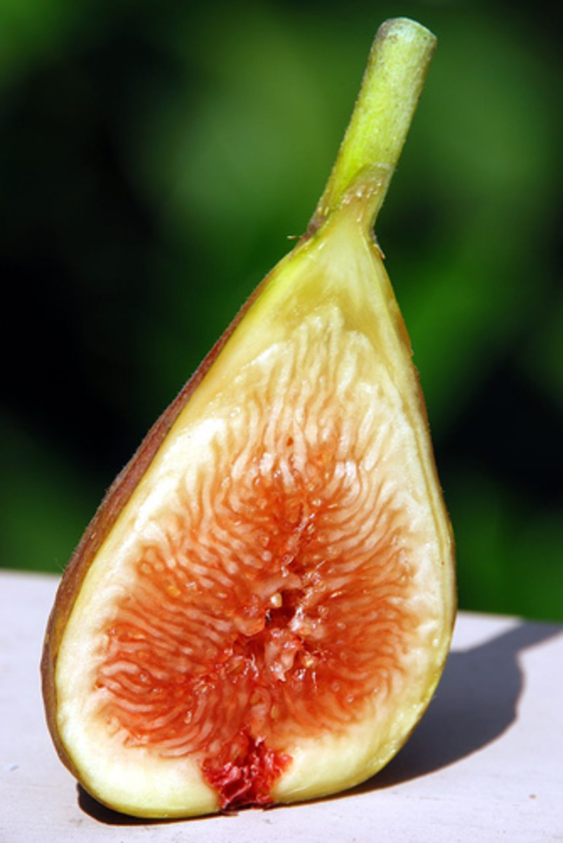 Fig fruit photo: Paphio @flickr