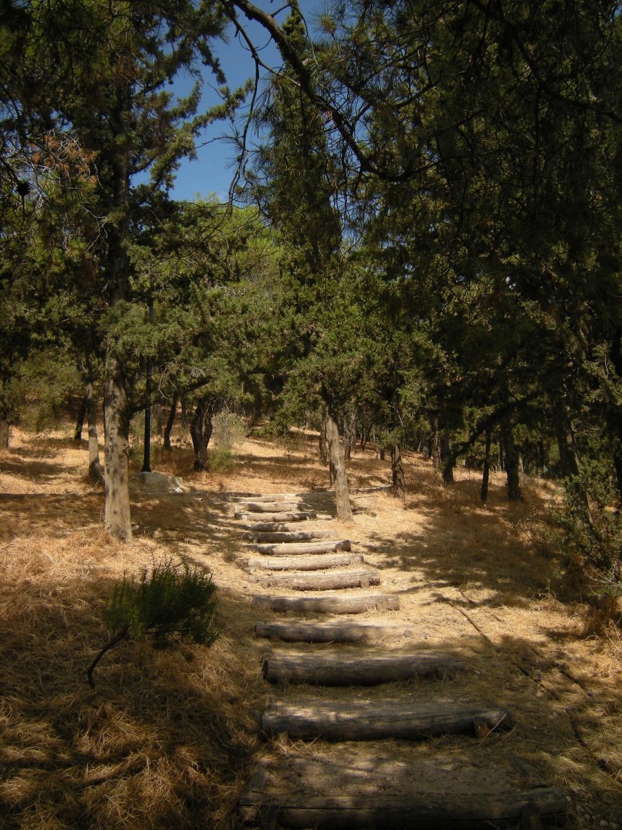 a typical path in the Greek woods