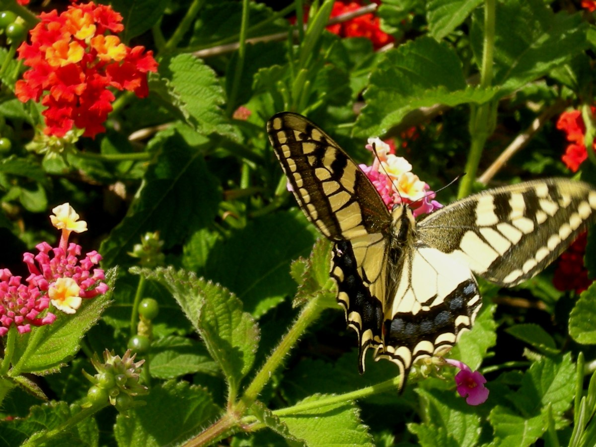 ...and a butterfly among wondrous flowers!