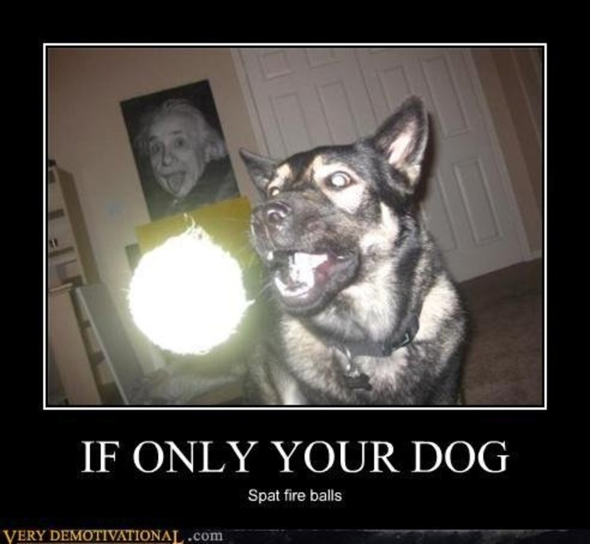 dog, fireball, fire, humor, jokes, comedy, funny