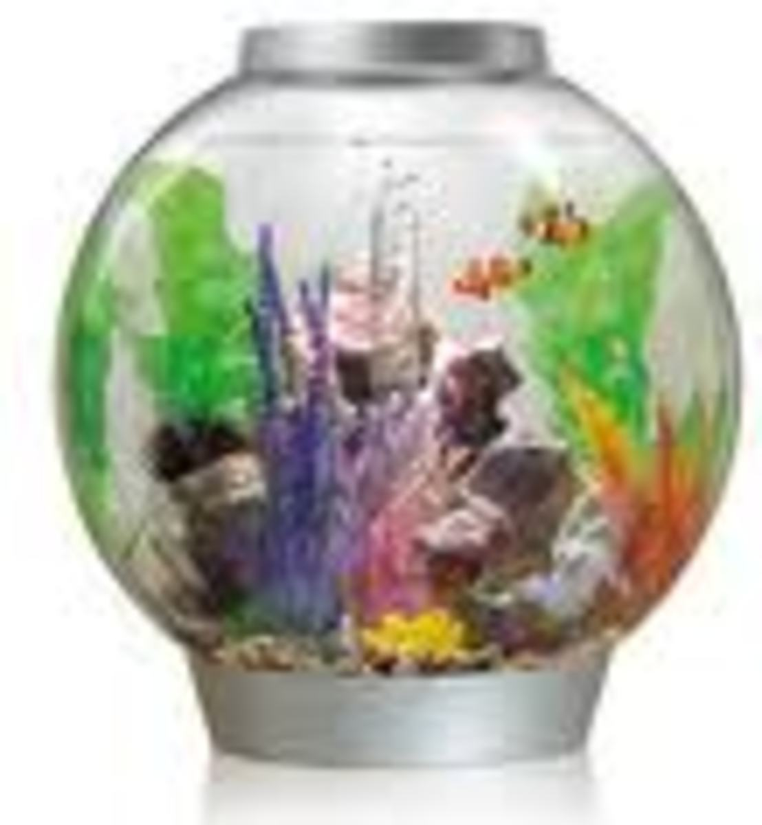 The Pros and Cons of Choosing a Biorb Fish Tank