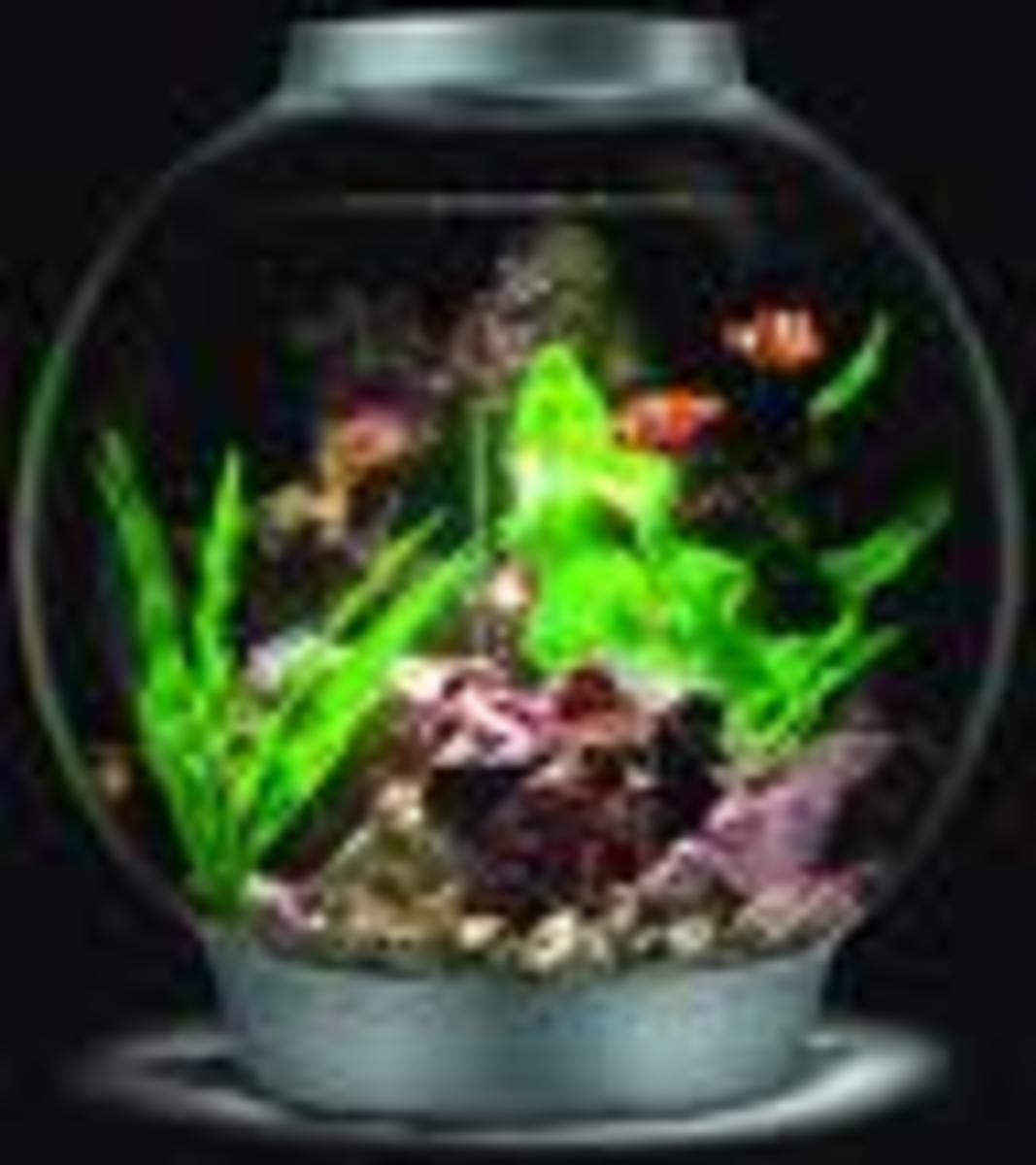 the-biorb-fish-tank