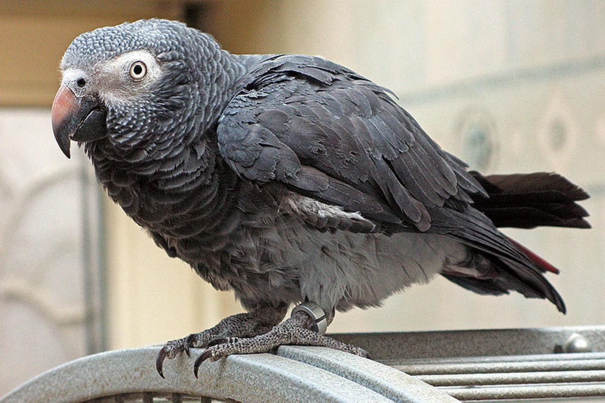 World's Most Intelligent Animal – World's Most Intelligent Bird - Highest Avian IQ Ever Recorded – Part 2
