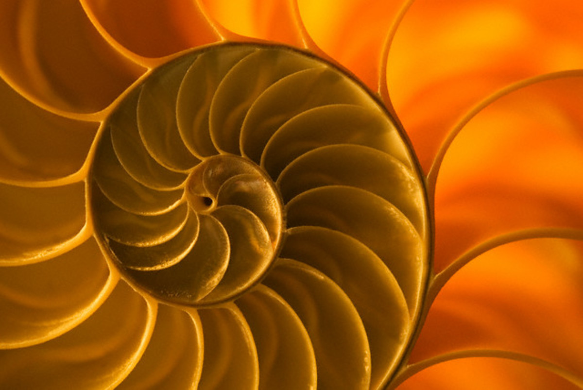 Fig. 1. Nautilus shall. The pattern of Fibonacci spiral is ubiquitous in the nature, including nautilus stall and galaxies.