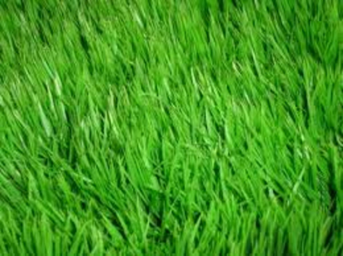 Perfect Grass -- Tips, Tricks, Advice