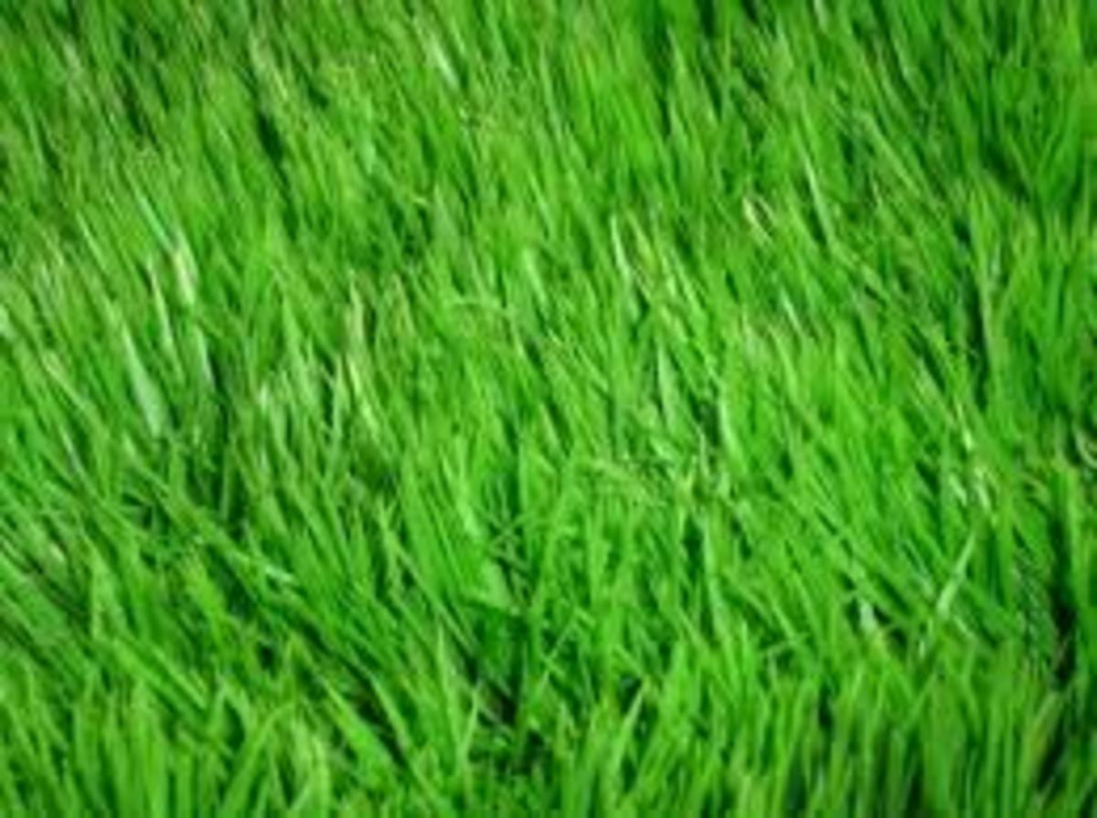 Perfect Grass -- Tips, Tricks, Advice