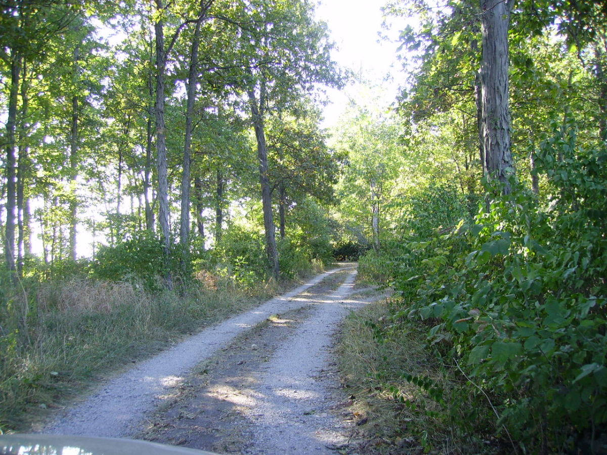 The tree-lined gravel drive