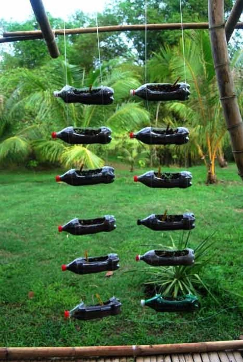 recycling plastic soda bottles as hanging planters