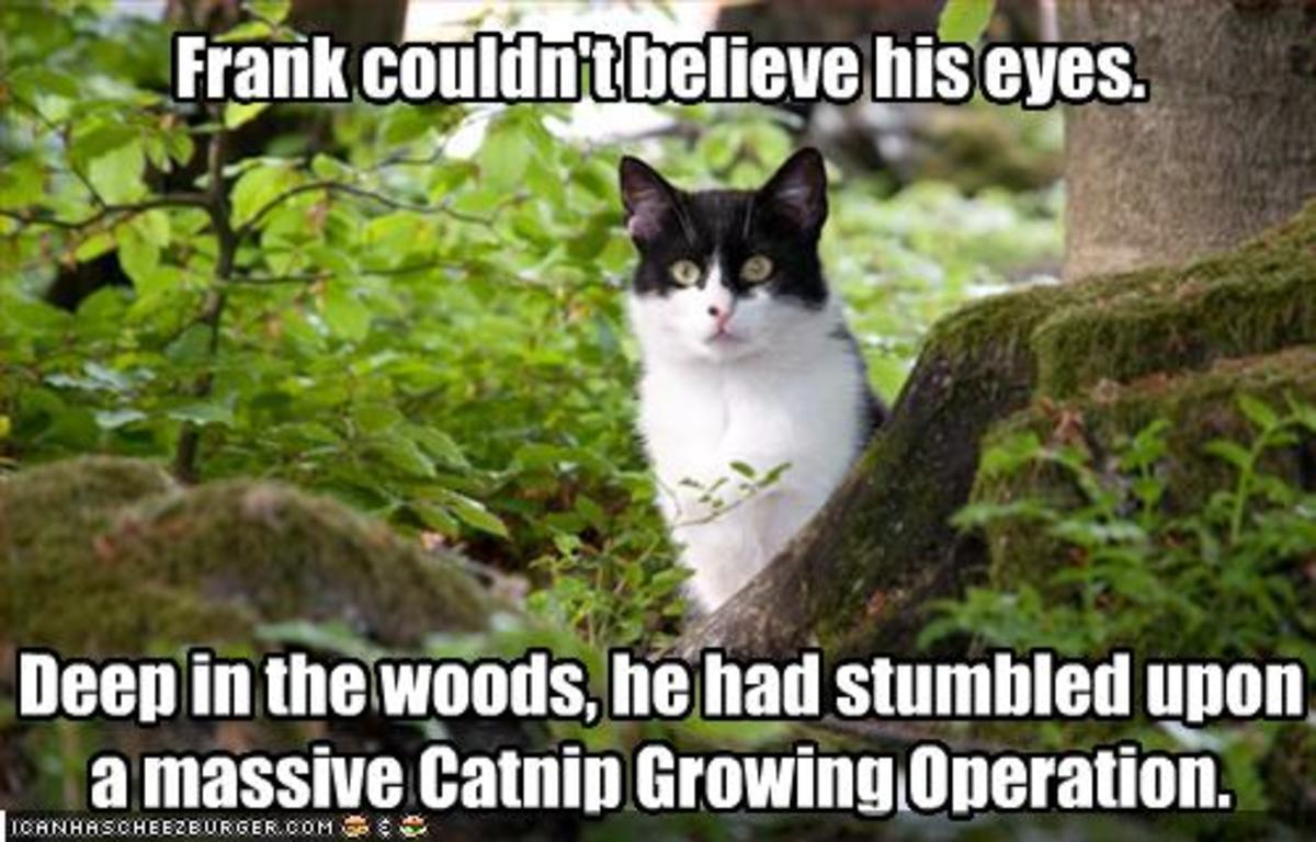 funny catnip picture