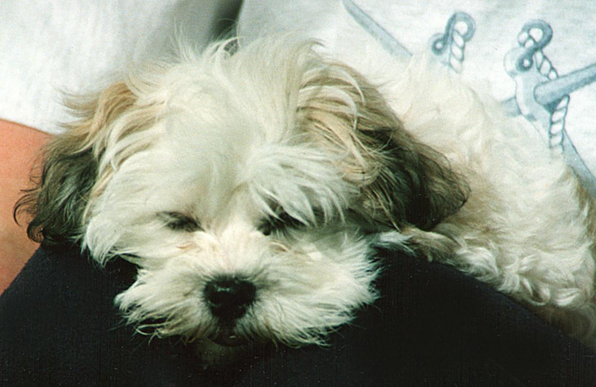 Primrose sleeping