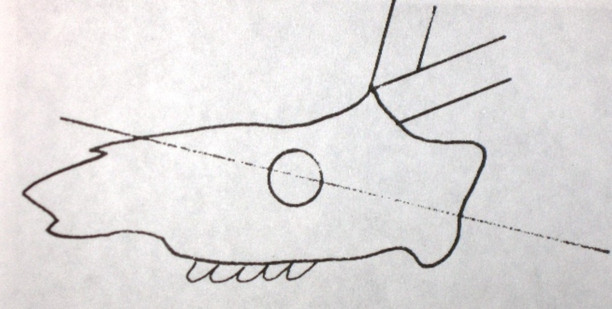 whitetail-shoulder-mount-the-basics