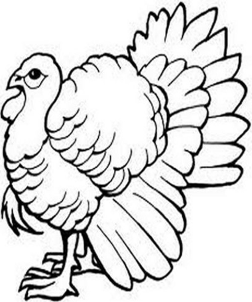 Endangered Animals Species List Kids Coloring Pages Free Colouring Pictures to Print - American Wild Turkey