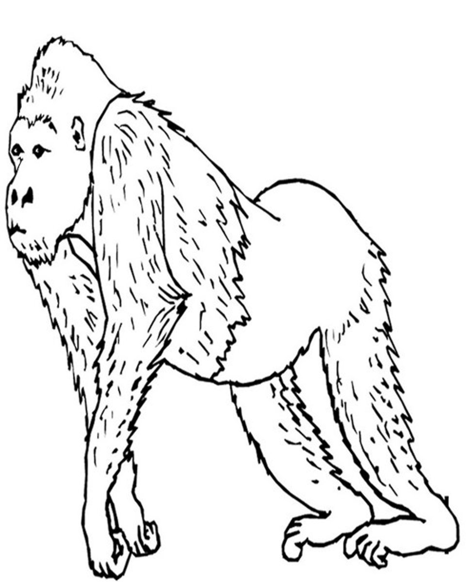 Endangered Animals Species List Kids Coloring Pages Free Colouring Pictures to Print - Gorilla