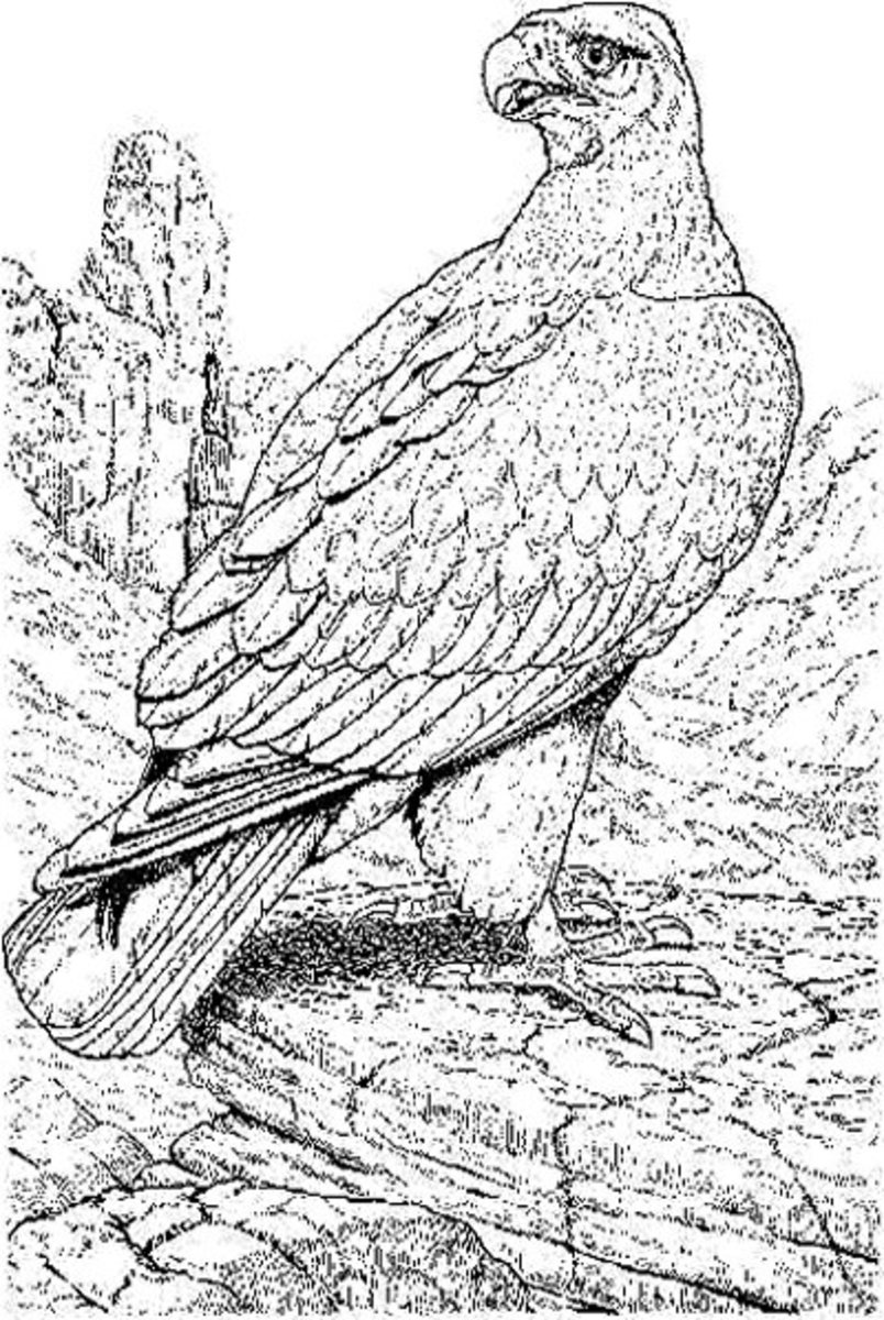 Endangered Animals Species List Kids Coloring Pages Free Colouring Pictures to Print - Bald Eagle