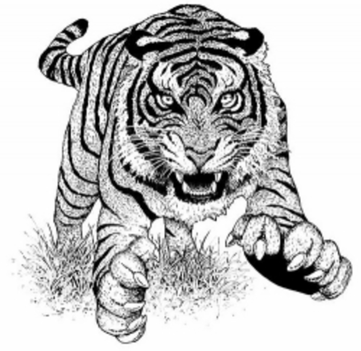 Endangered Animals Species List Kids Coloring Pages Free Colouring Pictures to Print - Bengal Tiger