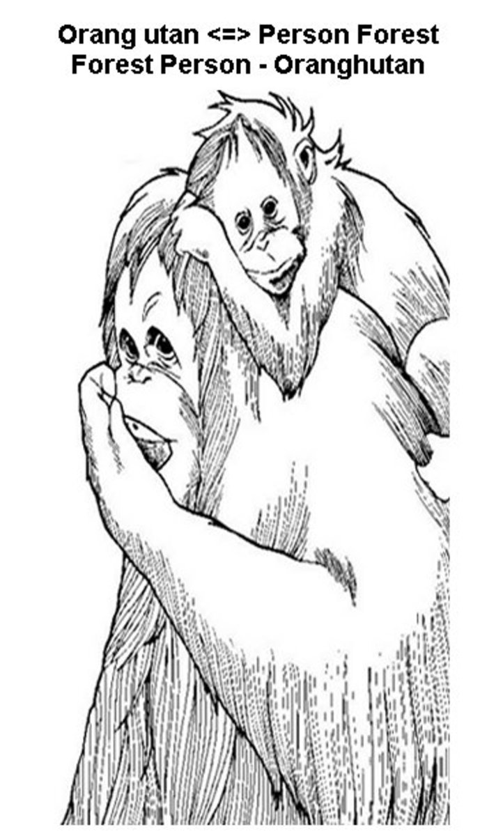 Endangered Animals Species List Kids Coloring Pages Free Colouring Pictures to Print - Orangutan