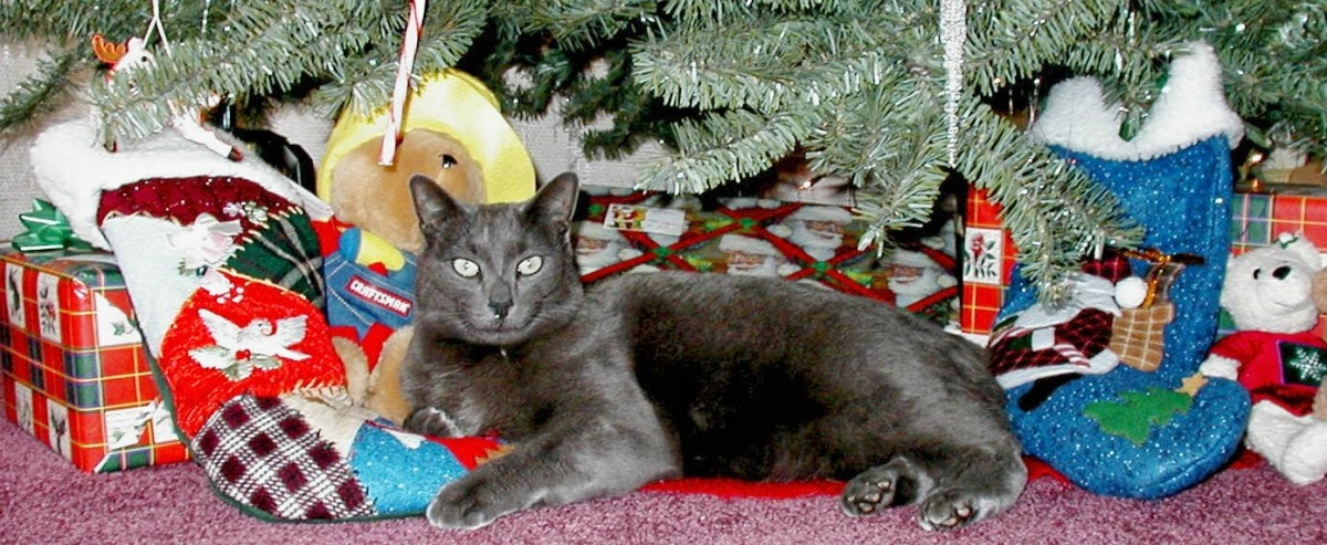 Our Christmas isn't complete without one of our cats enjoying the Christmas tree!