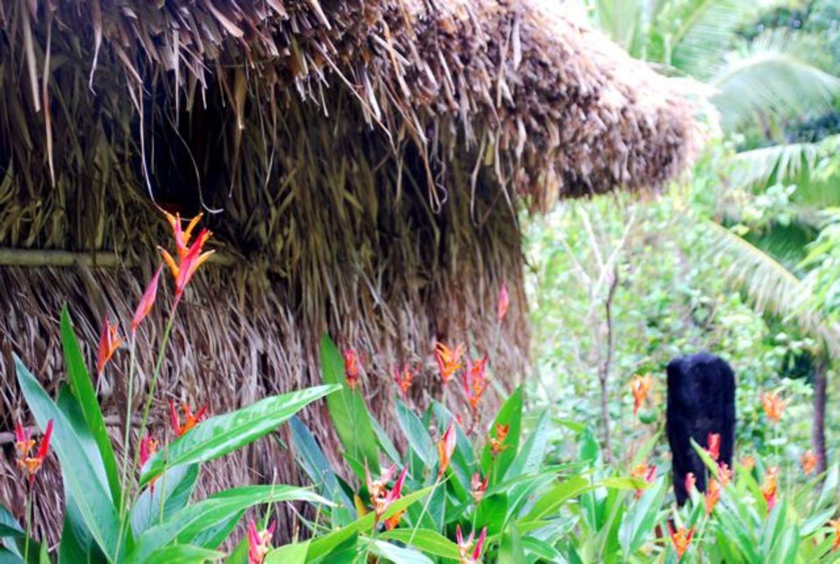 Beautiful tropical flowers around one of the bures at Matava, Fiji