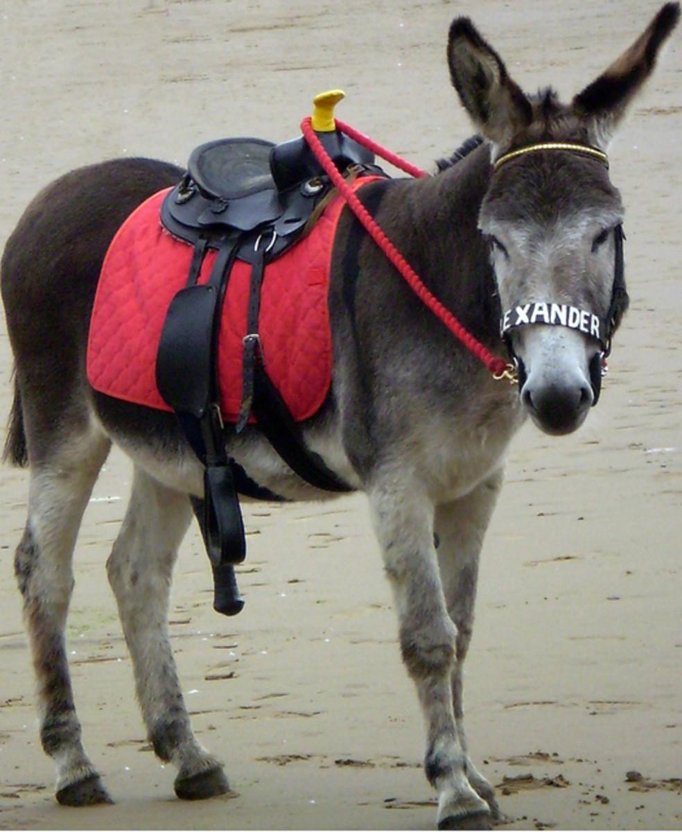 Alexander the donkey