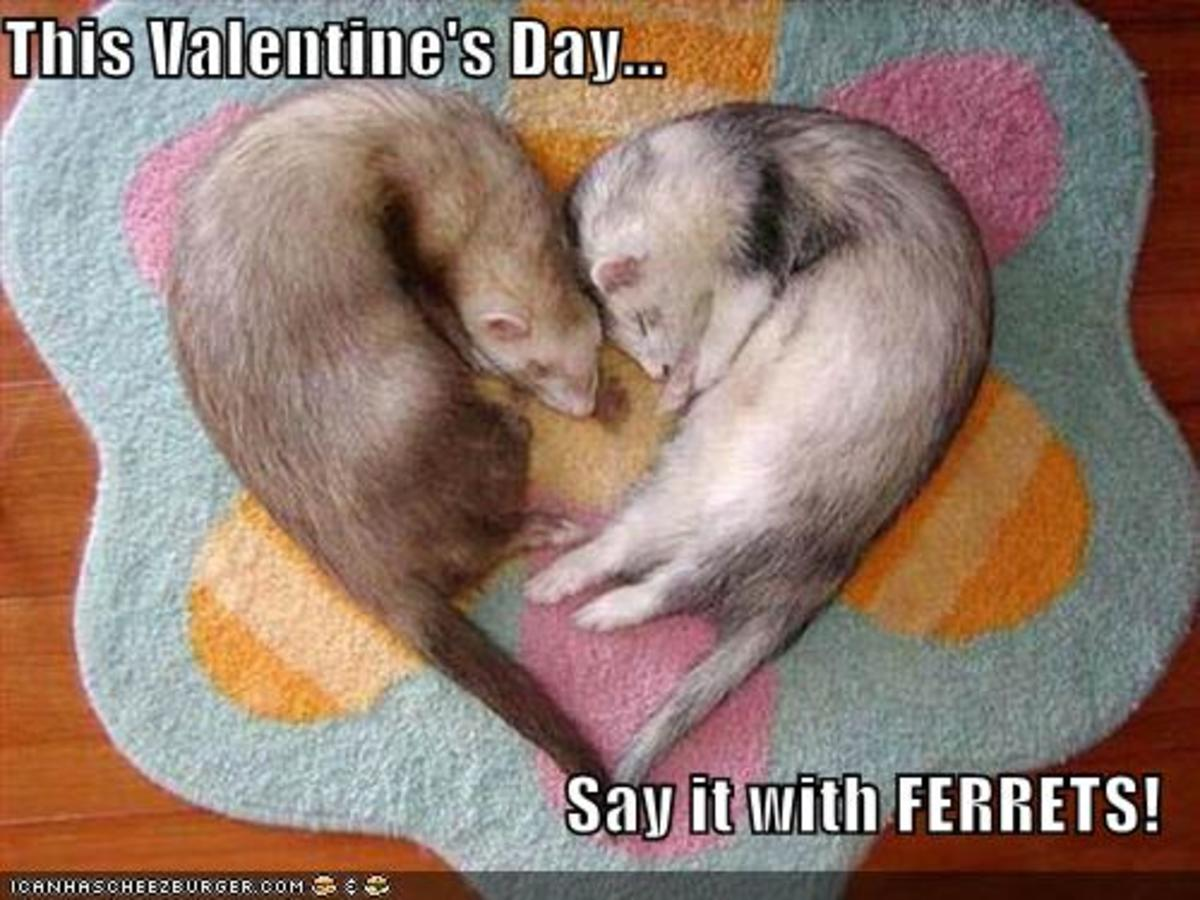 Ack!  This isn't a kitty!  But ferrets are cute too.