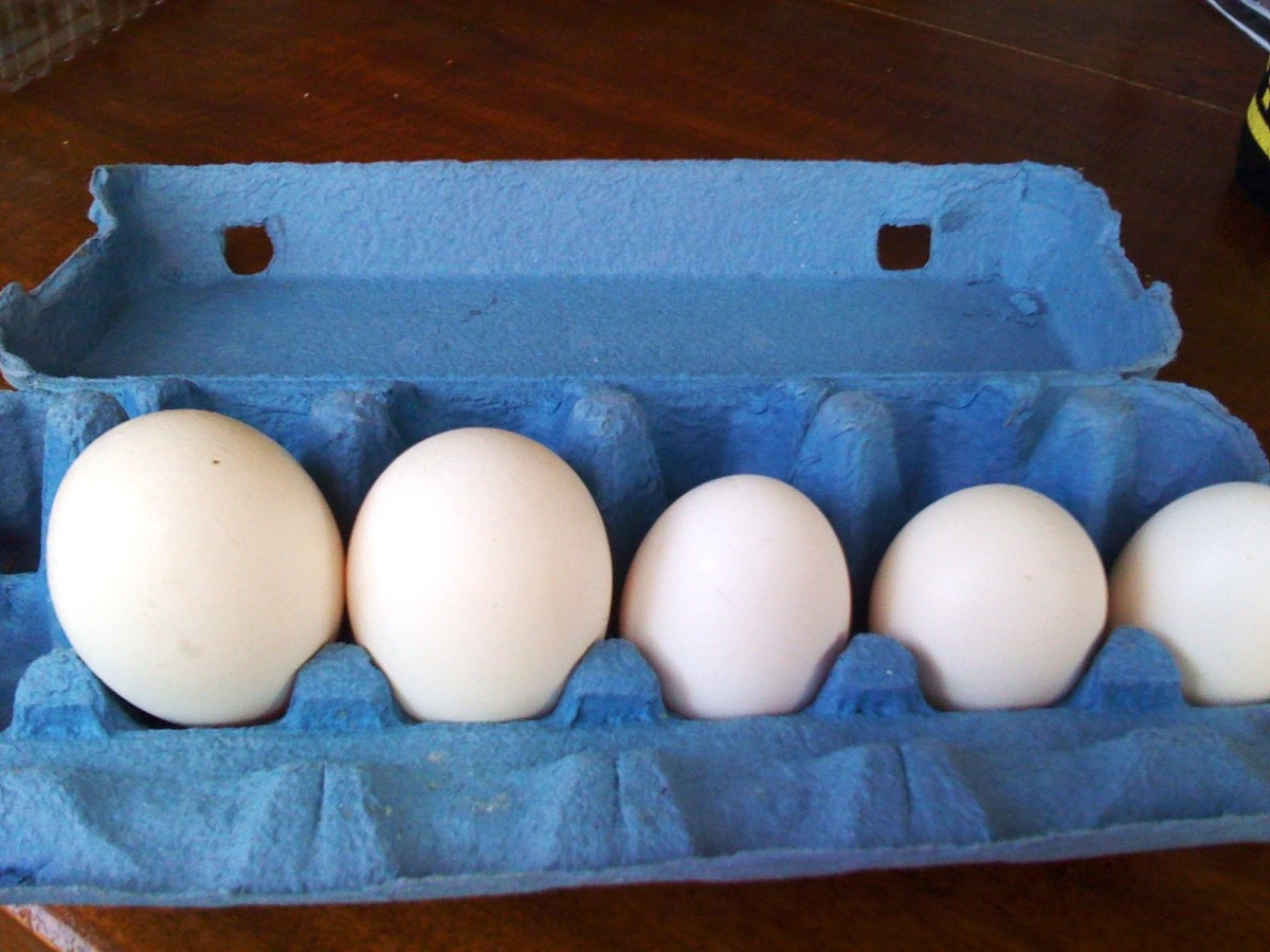 Egg Experiments: Naked Eggs, Wrinkly Eggs, Square Eggs, and More