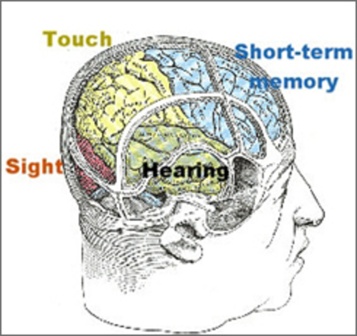 long-and-short-term-memory
