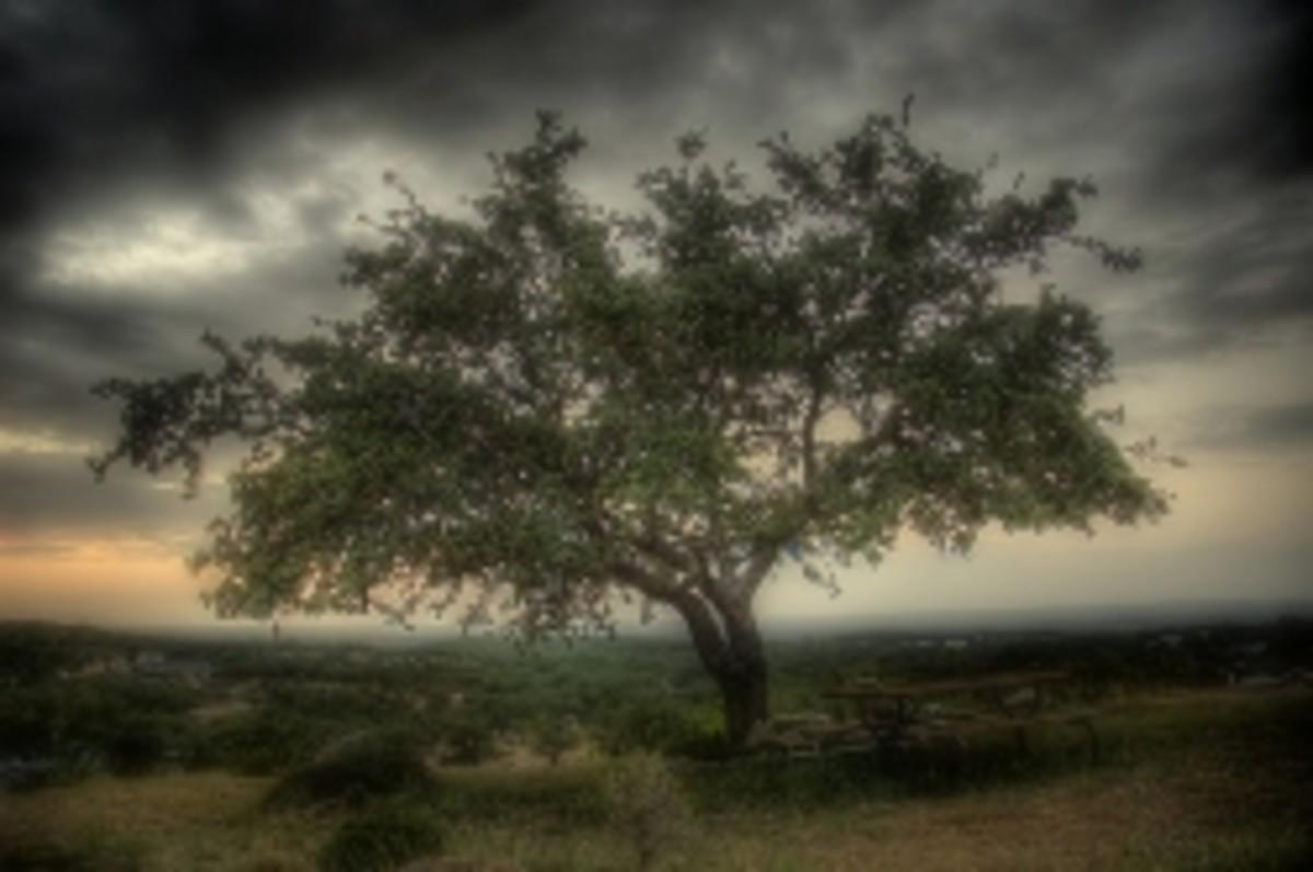 the-wonder-tree
