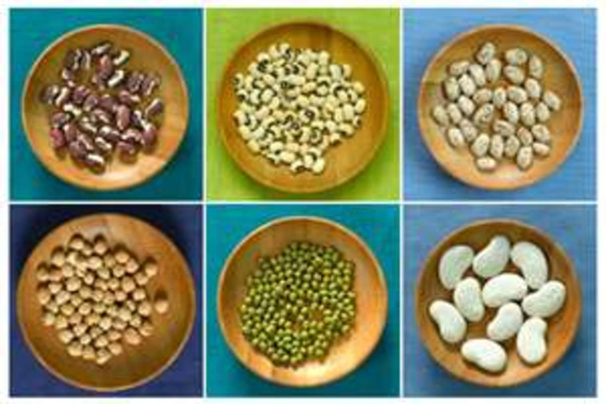 Legumes for Protein