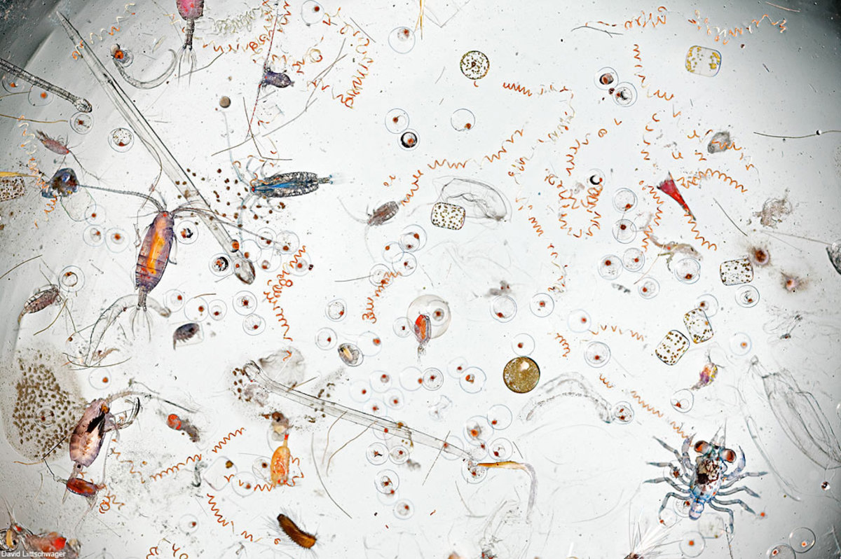 Microscopic organisms in a drop of seawater. This image was magnified 25X