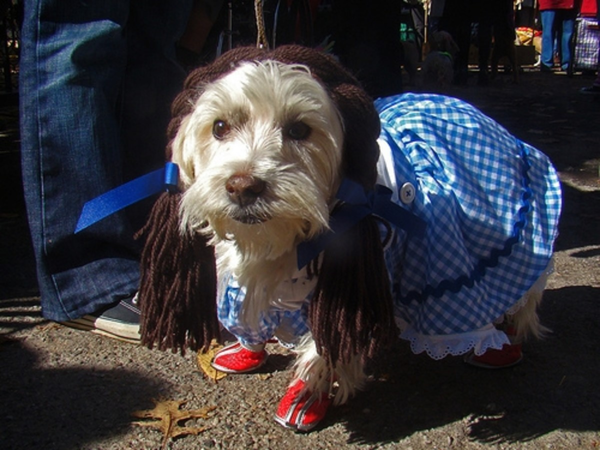 Dog dressed as Dorothy Wizard of Oz