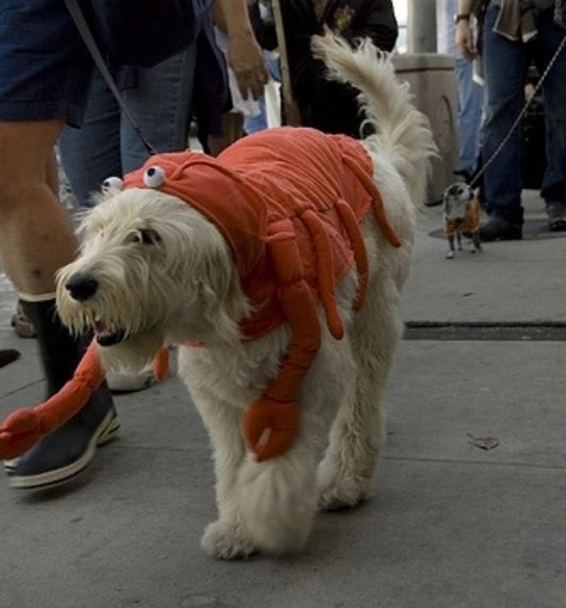 Lobster costume for dog